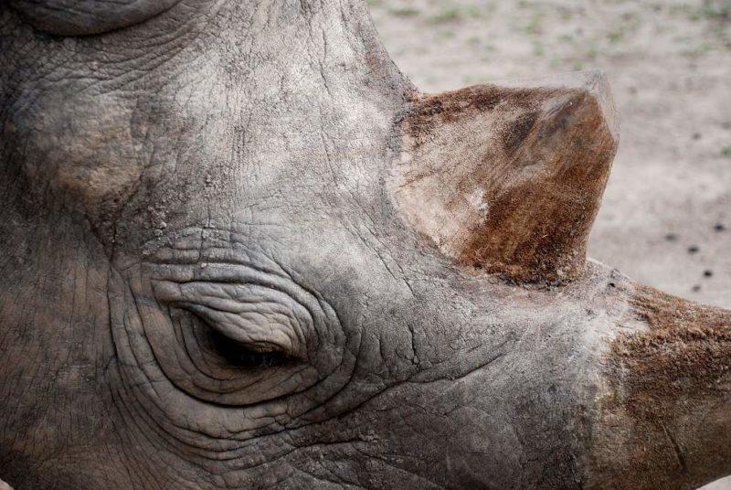 Safari à la recherche du rhinocéros noir - Kenya | Au Tigre Vanillé