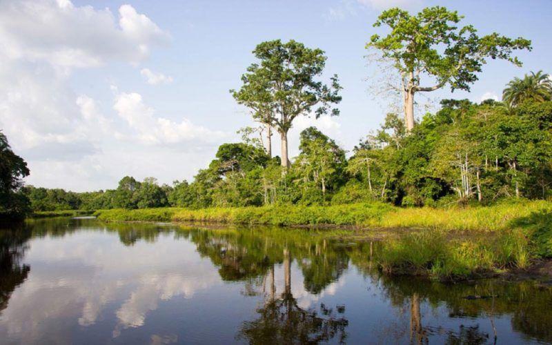Navigation sur la rivière Lekoli - Congo   Au Tigre Vanillé