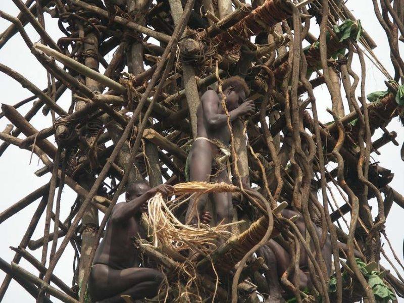 Assister au saut du gaul sur l'île de Pentecôte - Vanuatu | Au Tigre Vanillé