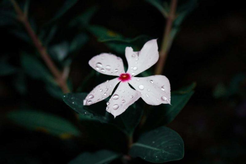 Découverte des plantes du parc de Mountain Pine Ridge - Belize | Au Tigre Vanillé