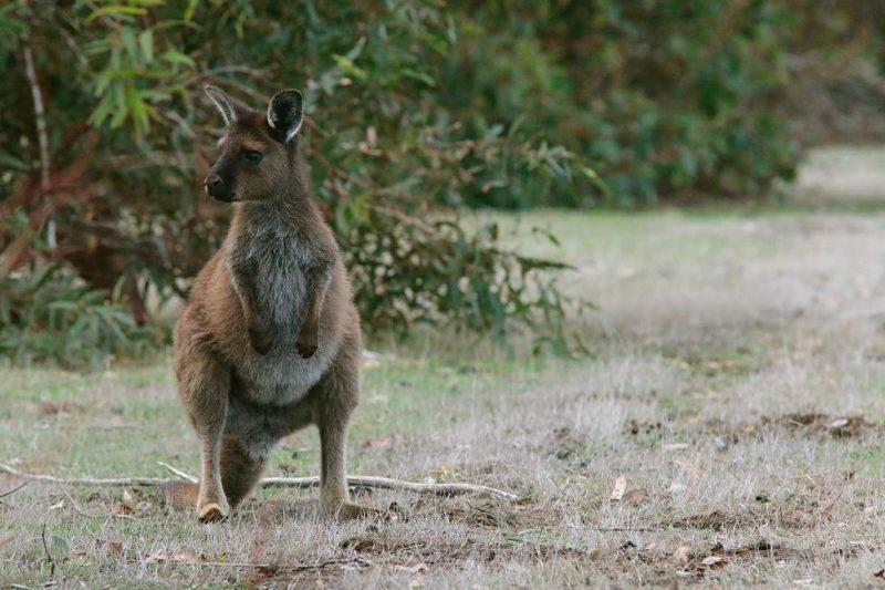Séjour sur l'île des Kangourous - Australie | Au Tigre Vanillé