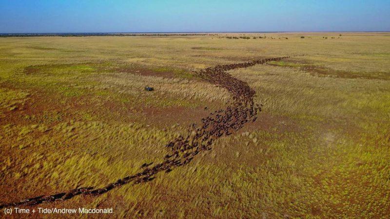 Assister à la migration des gnous bleus dans les plaines de Liuwa - Zambie | Au Tigre Vanillé