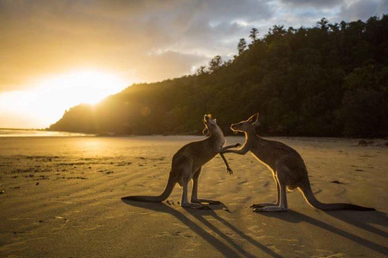 Observation de la faune nocturne dans le parc de Freycinet - Australie | Au Tigre Vanillé