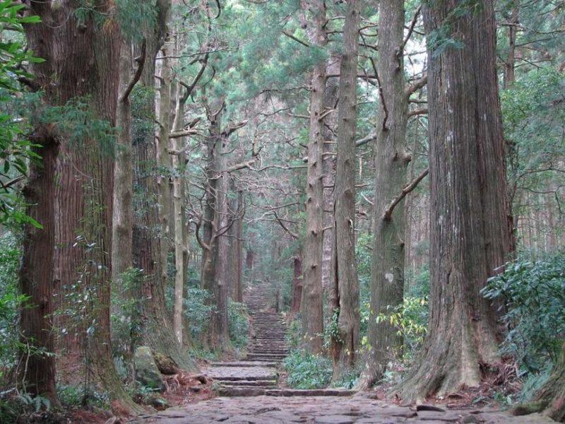 Randonnée dans le Tohoku - Japon | Au Tigre Vanillé