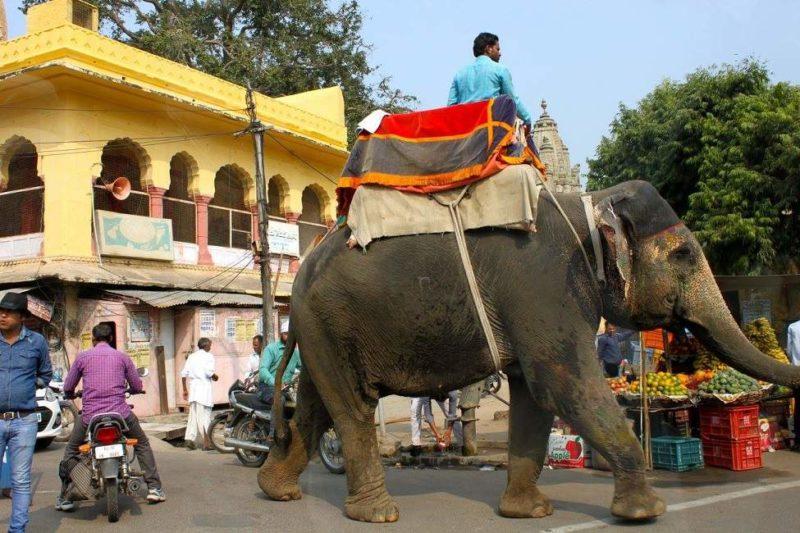 Marché dans les rues de Jaipur - Rajasthan, Inde | Au Tigre Vanillé
