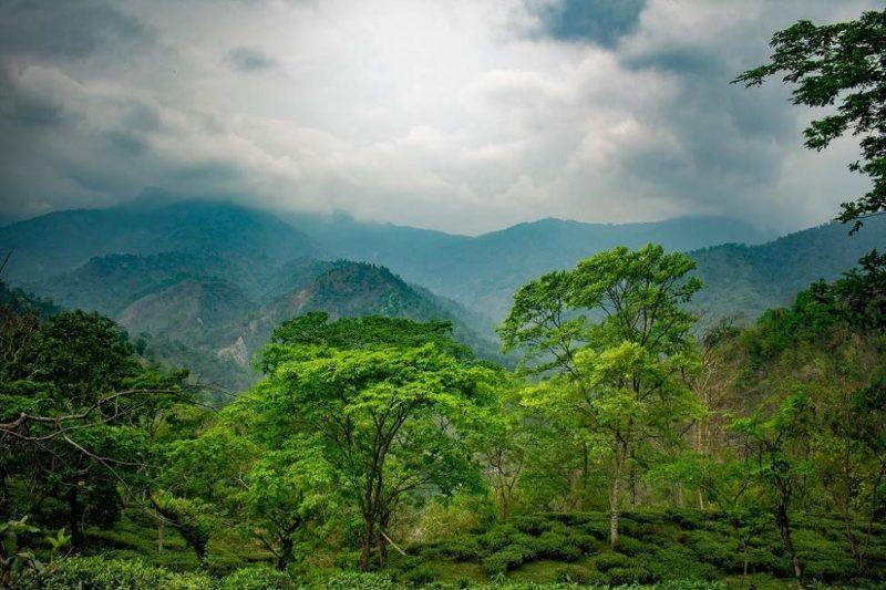 Découverte des plantations de thé de Glenburn - Inde de l'Est | Au Tigre Vanillé
