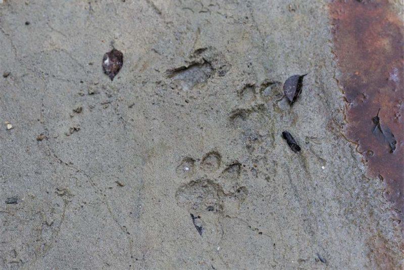 Suivre les traces du tigre dans le parc de Pakke - Inde de l'Est | Au Tigre Vanillé