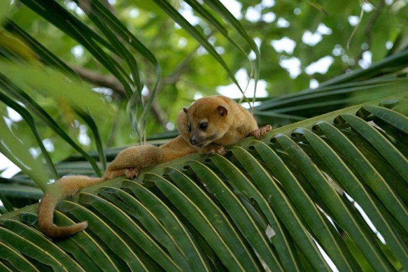 Rencontre avec les animaux du centre Arcas - Guatemala | Au Tigre Vanillé