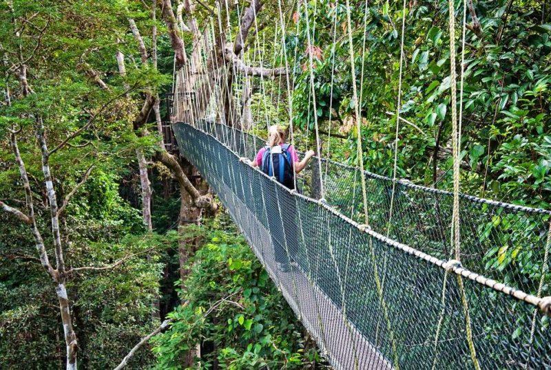 Balade au-dessus de la canopée dans le vallée de Danum - Malaisie | Au Tigre Vanillé