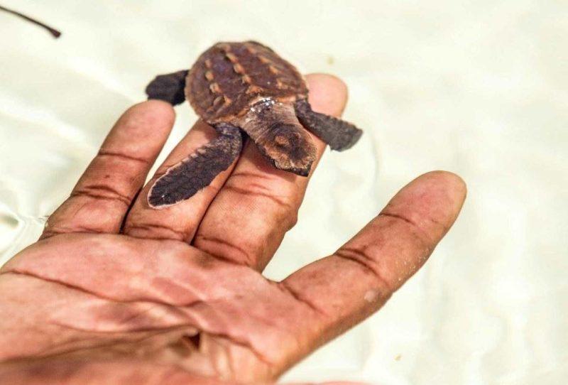 Prendre part aux programmes de conservation sur l'île d'Alphonse - Seychelles | Au Tigre Vanillé