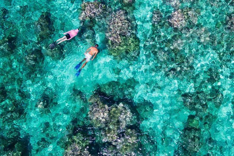 Prendre part à un safari marin dans les eaux de Cosmoledo - Seychelles | Au Tigre Vanillé