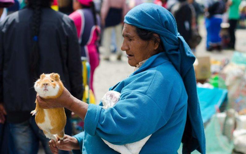 Rencontrer les indigènes Imbabura dans la région d'Otovalo - Equateur | Au Tigre Vanillé