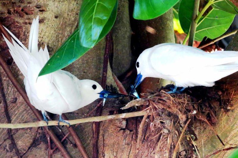 Observation des oiseaux de l'île de Bird - Seychelles | Au Tigre Vanillé