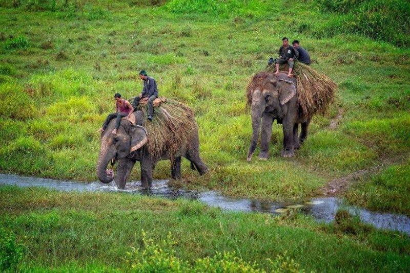 S'occuper des éléphants au parc de Chitwan - Népal | Au Tigre Vanillé