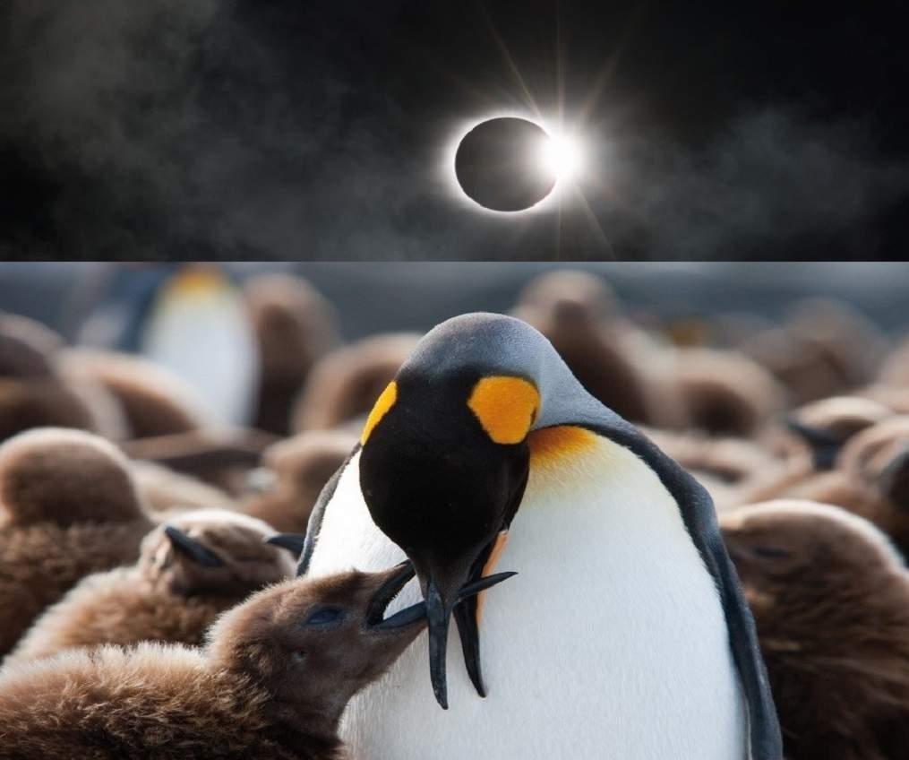 Croisière d'expédition à l'occasion de l'éclipse solaire - Antarctique | Au Tigre Vanillé